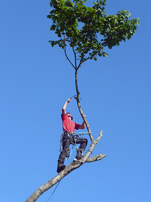 Principal Tom Bunday up a tree