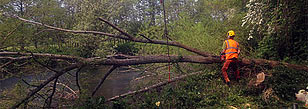 Tree felling by a river