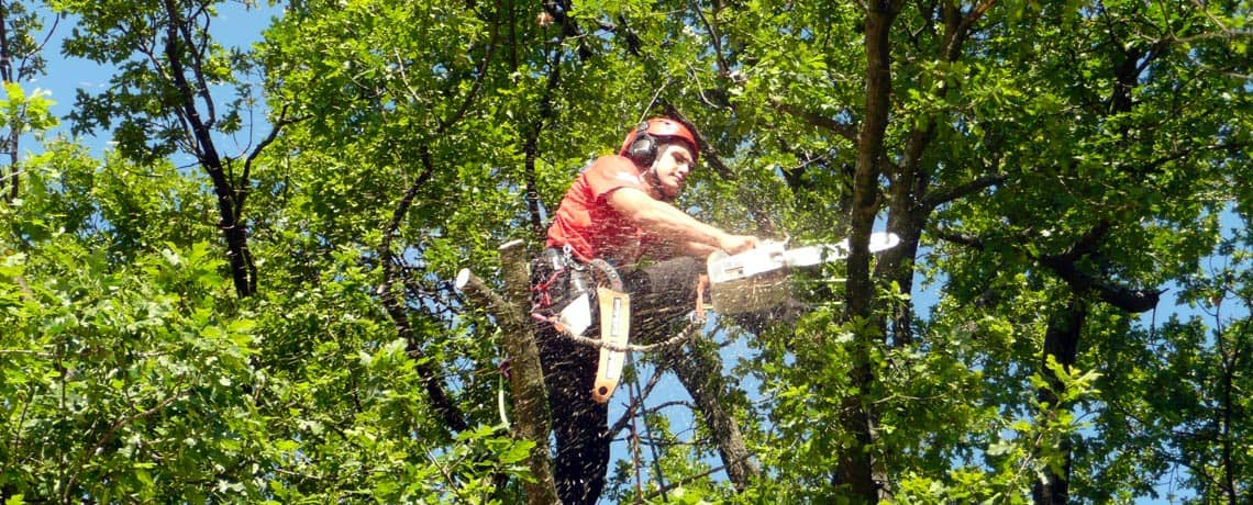 Tom using a chainsaw up a tree.