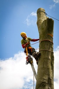 High Up Tree with Chainsaw