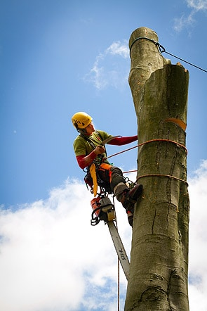 Climbers Way Tree Surgeon up a Tree