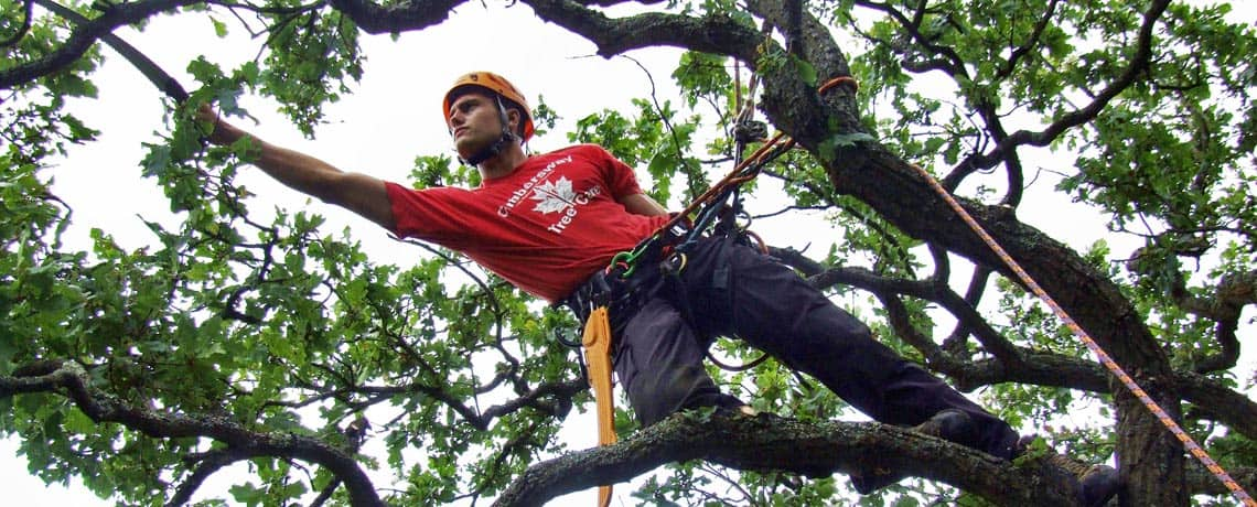 Climbers Way Tree Care