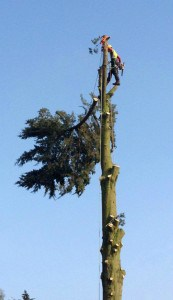 Brockenhurst Tree Surgery