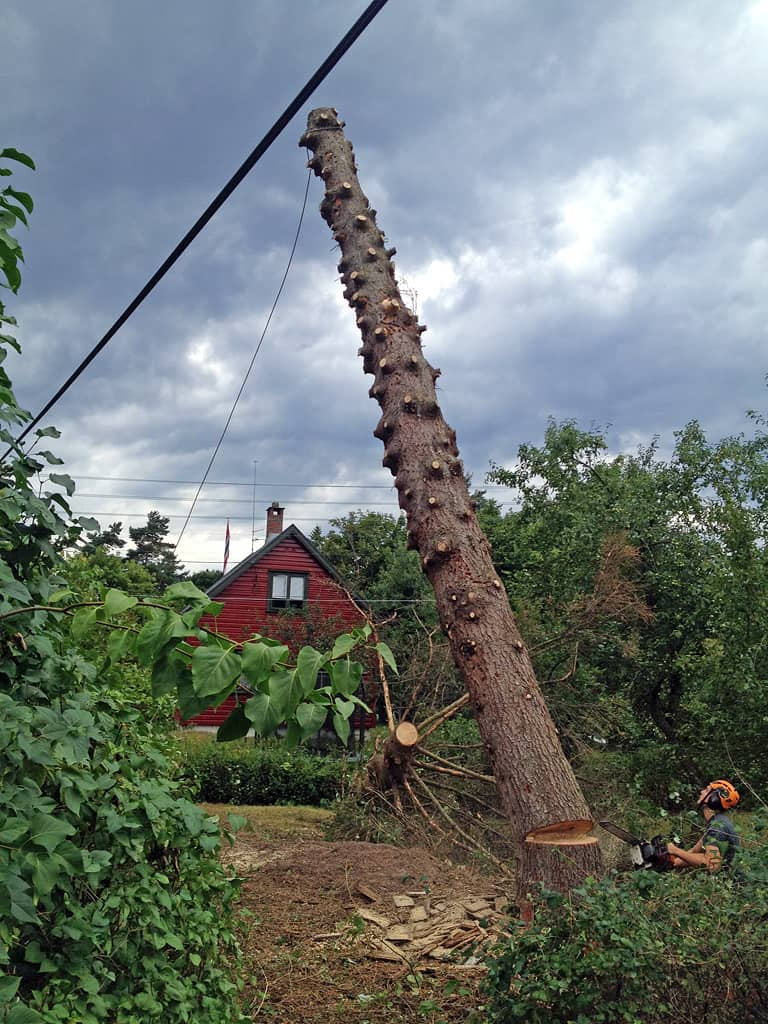 Tree Felling: After