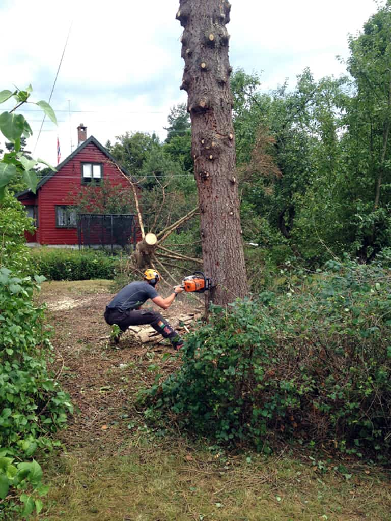 Tree Felling: Before