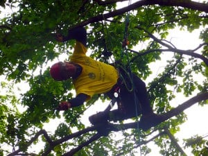 Crown Thinning in West Wellow