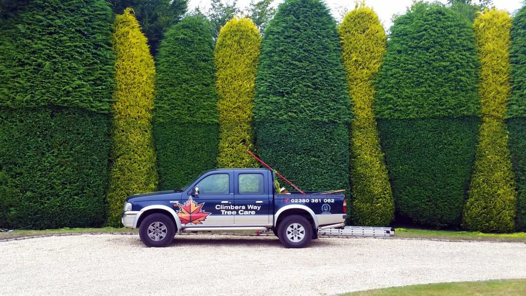 Hedge Work by Climbersway Tree Care