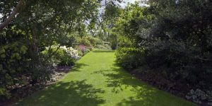 7 Ways to Get More Light Into Your Garden