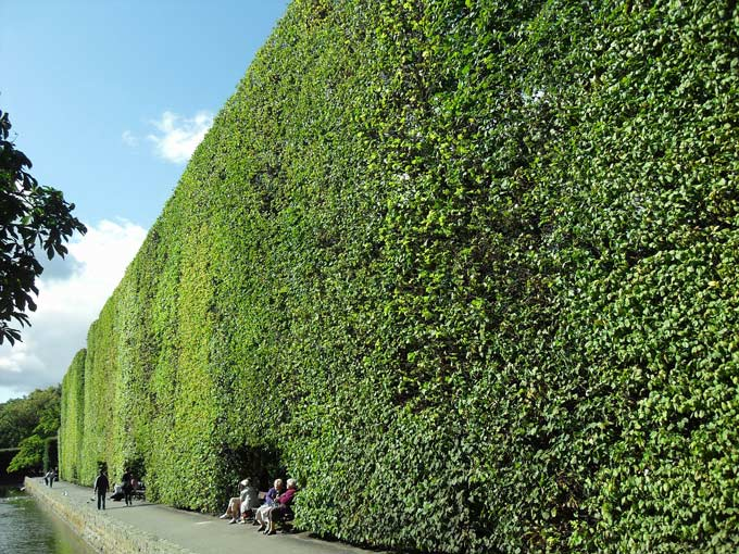 A very large formal hedge