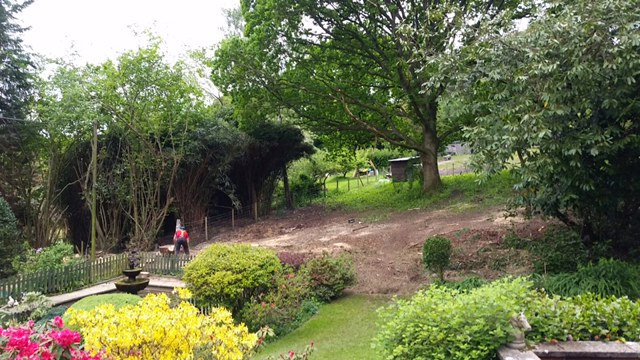 A picture showing the garden after the leylandii trees had been removed.