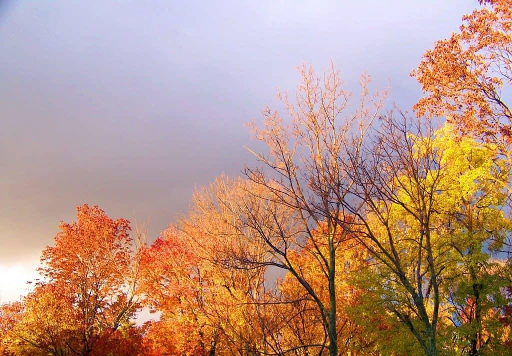 Stormy Autumnal Sky