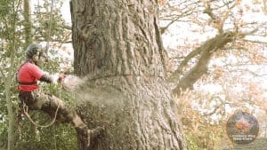 Wallingford tree surgeon at work