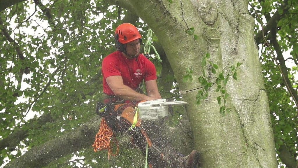 Oxford Tree Surgeons Cutting a Tree