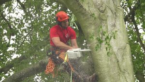 Tree & Hedge Maintenance