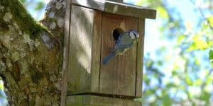 Clearing Out Nest Boxes