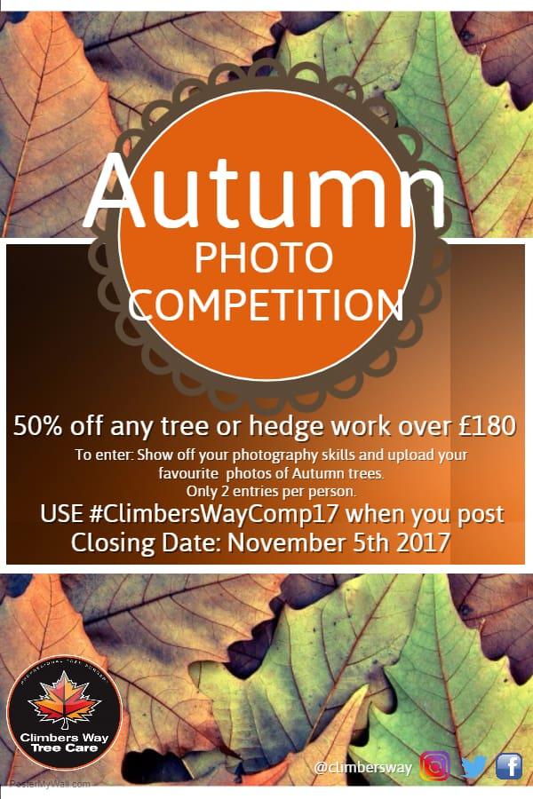 Autumn Photo Competition Poster