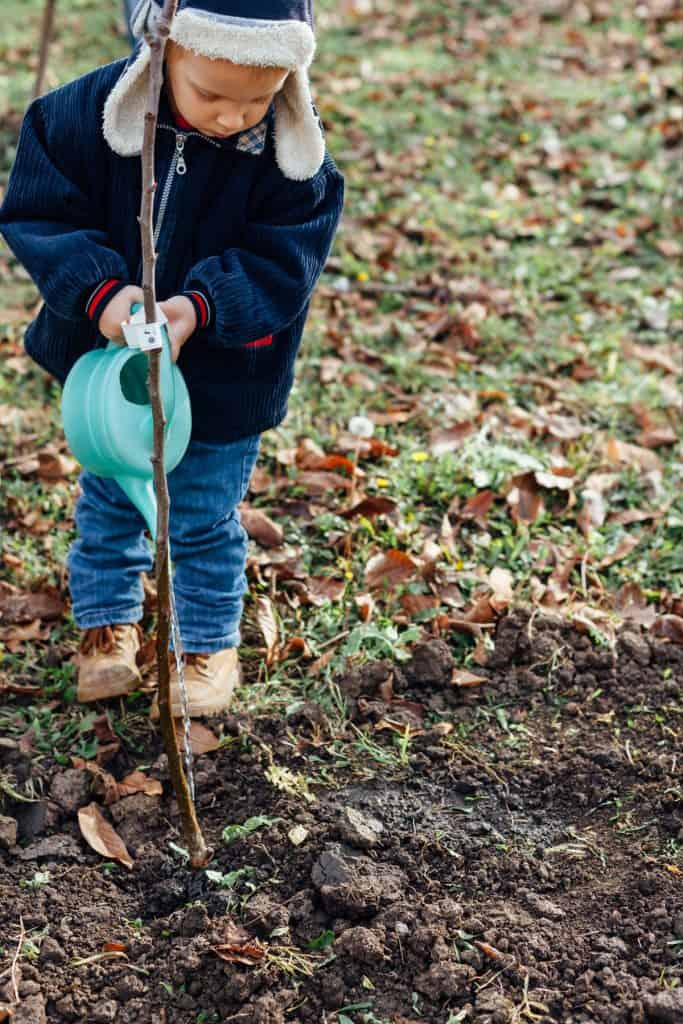 A young boy watering a newly planted tree