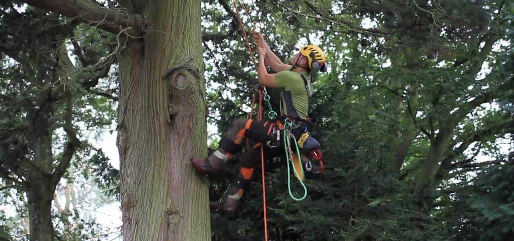 Banbury Tree Surgeons Climbers Way Tree Care