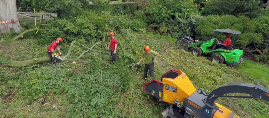 Tree surgeons working in Abingdon-on-Thames
