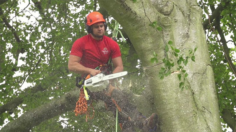 Bicester tree surgery