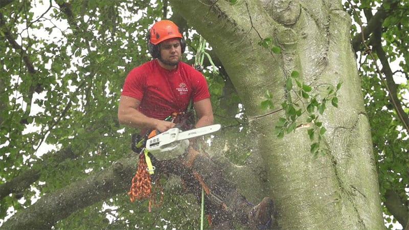 Wallingford tree surgery