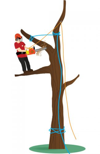 An illustration showing a tree dismantle