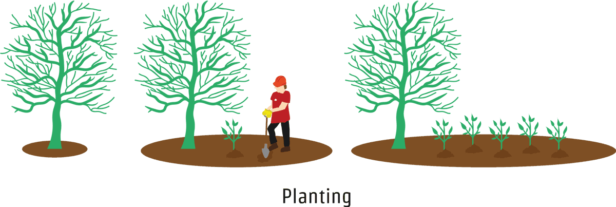 Tree planting service in Hampshire