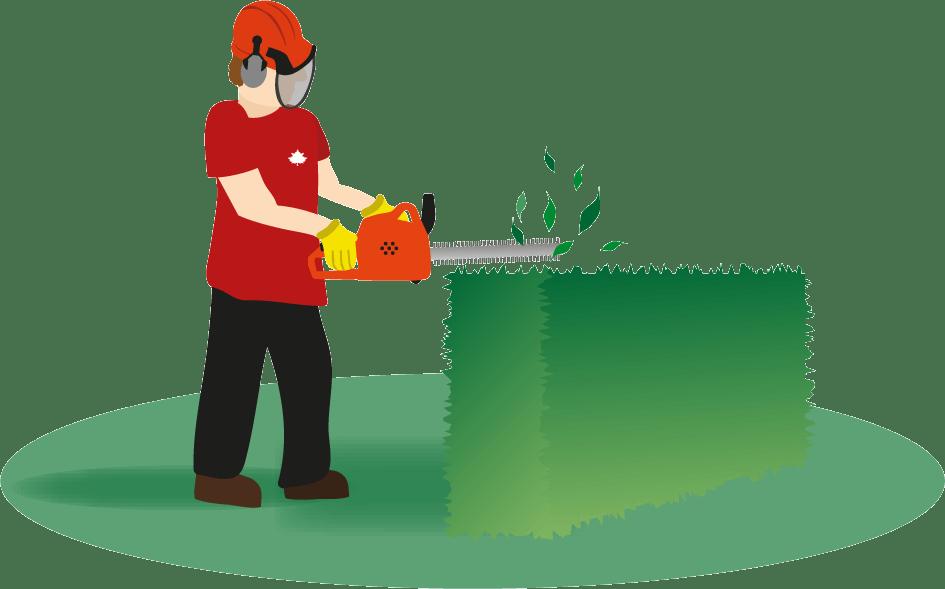 Hedge Trimming Illustration