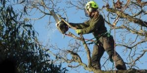 Climbers Way Tree Care pruning in Winchester