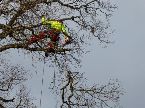 Climbers Way Tree Care pruning in Hampshire
