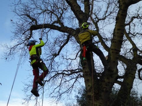 Climbers Way Tree Care pruning in Oxford
