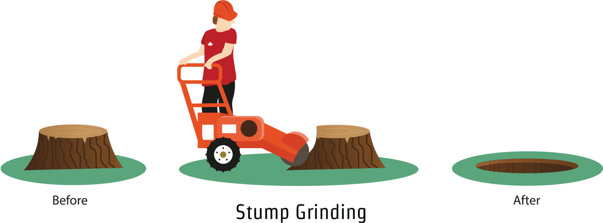An illustration demonstrating stump grinding in Southampton, Winchester and Oxford