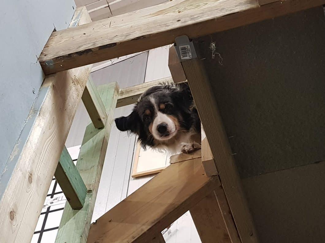Reggie, a Climbers Way Dog