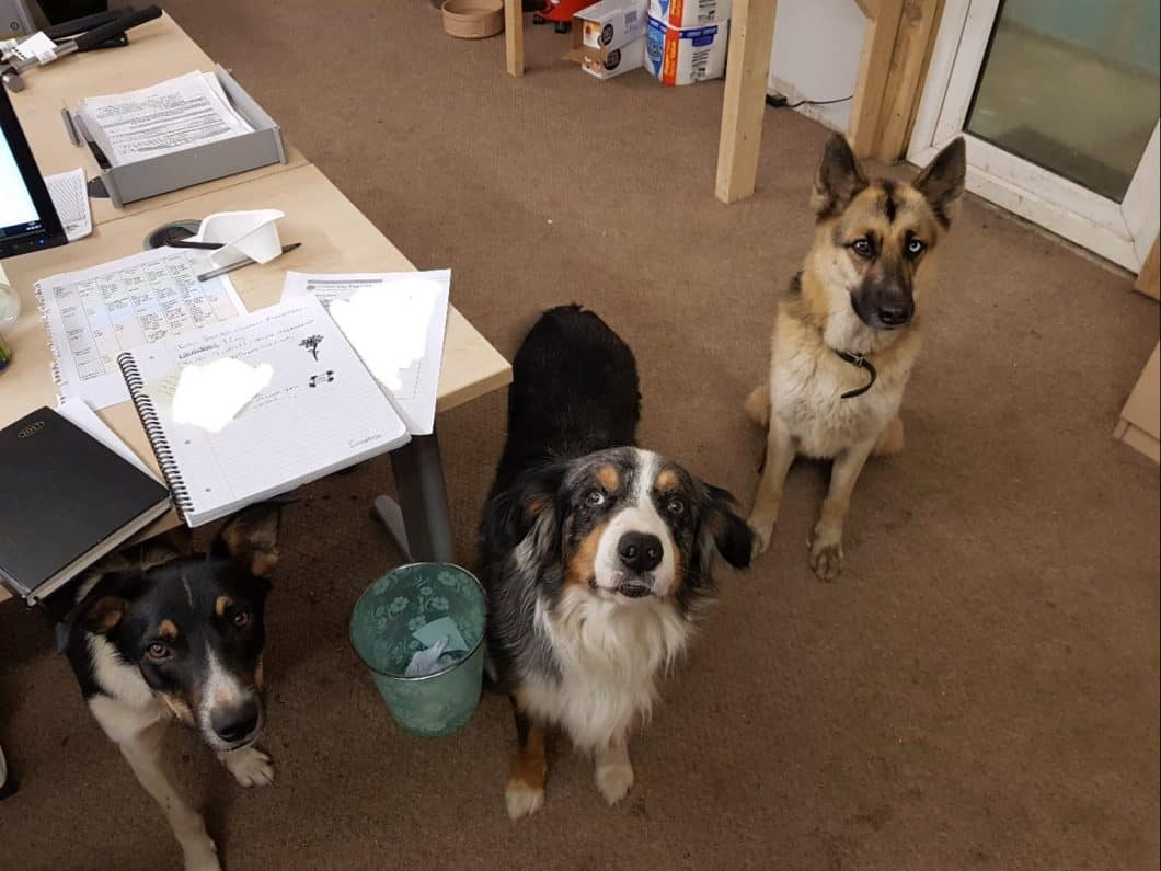 The Company Dogs