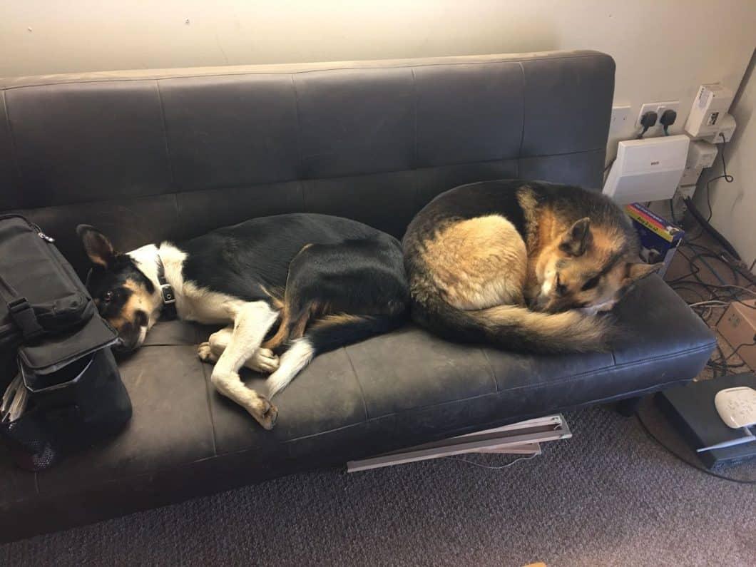 Roody & Skyla - Climbers Way Tree Care Office Dogs