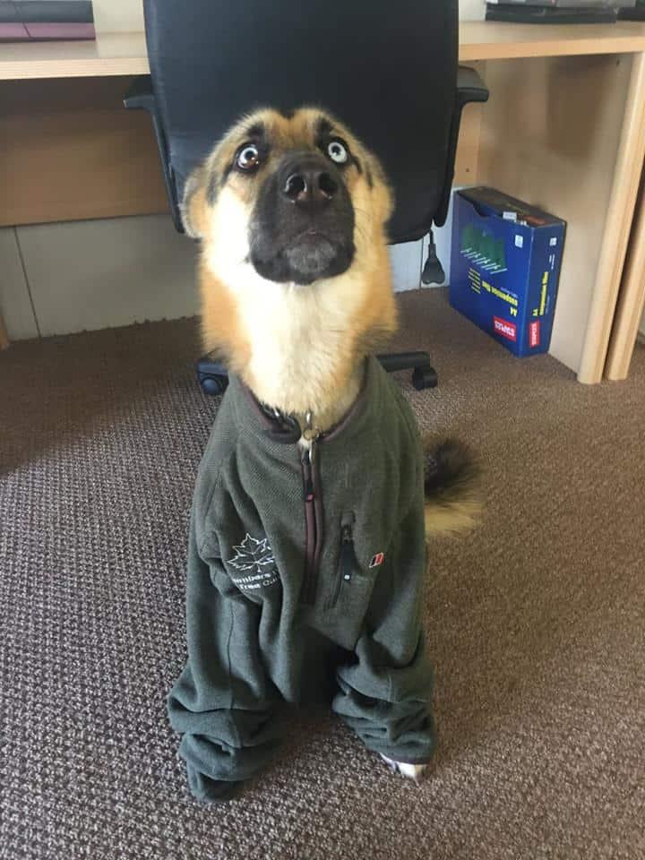 Skyla - Climbers Way Dog