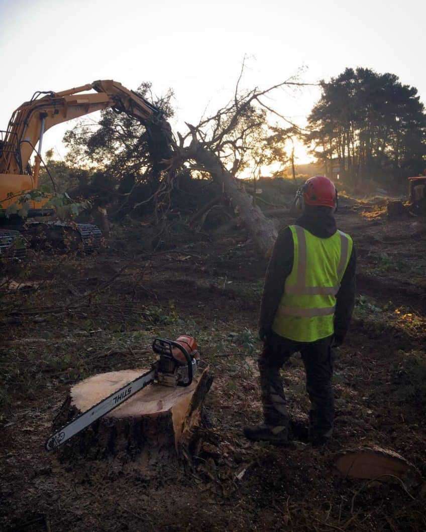 What's Involved in a Site Clearance?