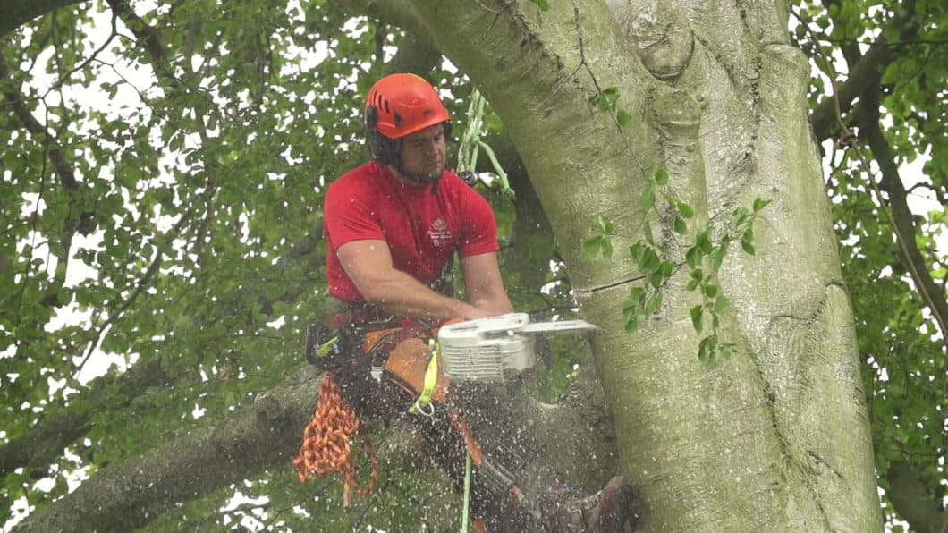 Southampton Tree Surgeons Cutting a Tree