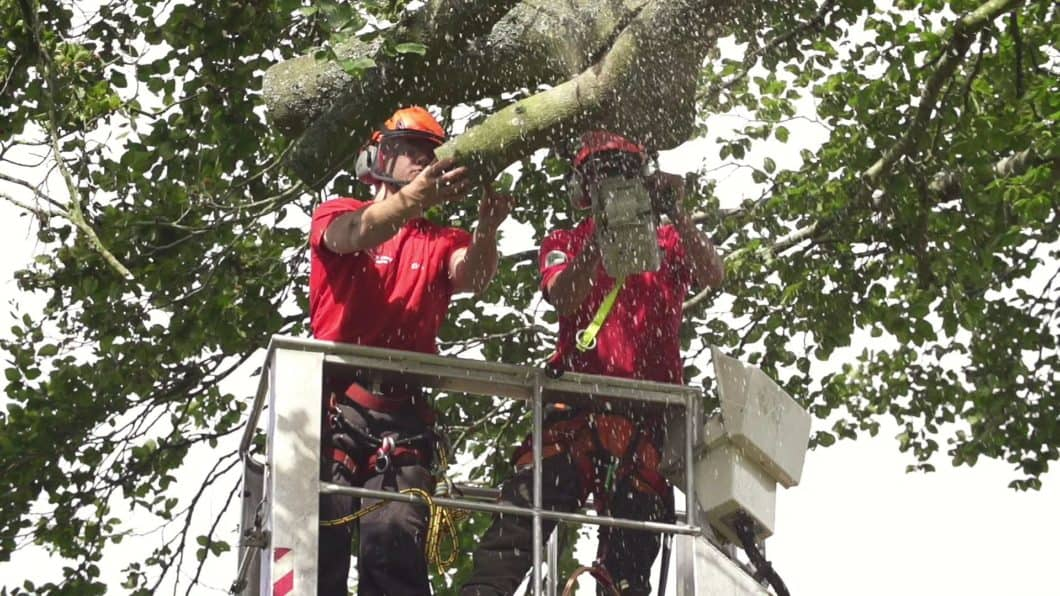 Tree surgeons working in Farnborough together
