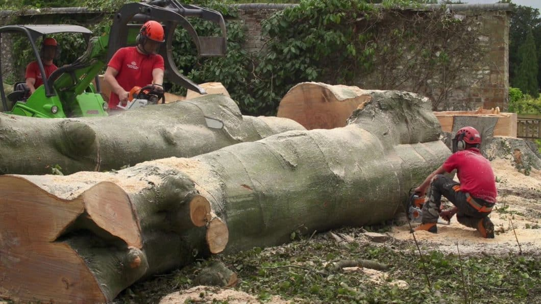 Guildford Tree Surgeons dealing with large tree trunks