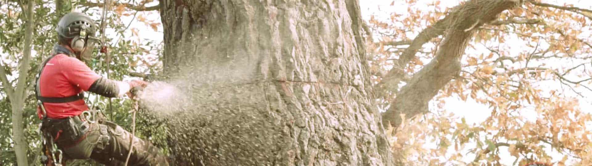 Tree Felling & Tree Dismantling