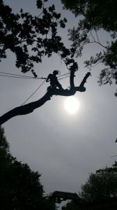 Climbers Way Tree Care Tree Surgeons
