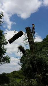 Tree Dismantle