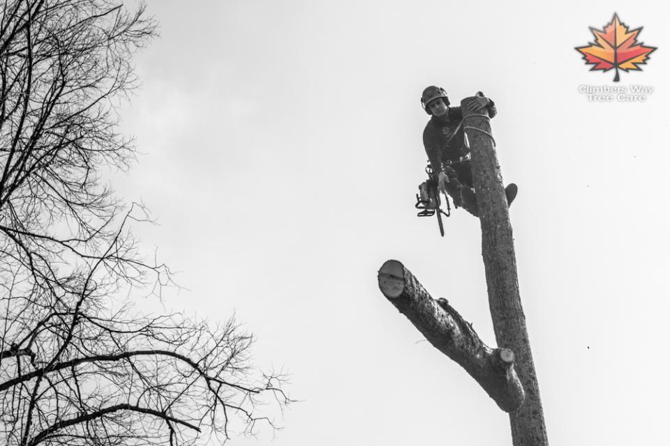 Lyndhurst Tree Surgery