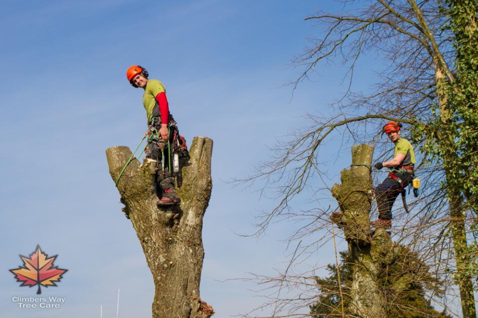 Hythe Tree Surgery